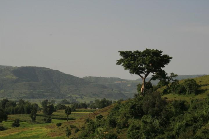 Bale-Mountain