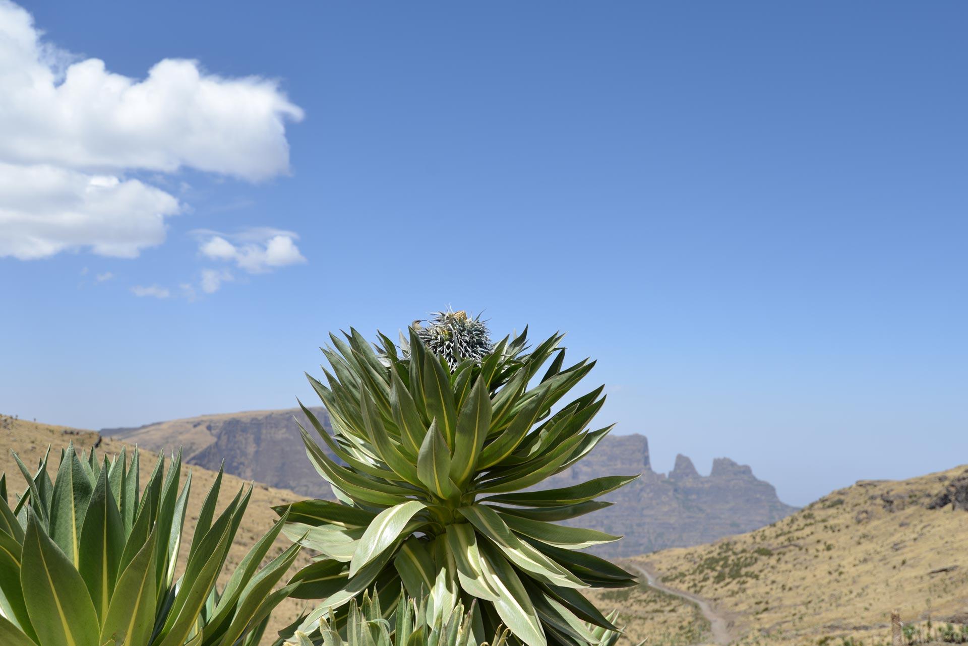 Semien-mountain01