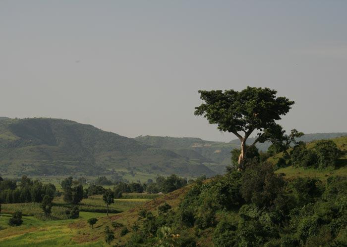 bale-mountains-004